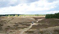 Nemitzer Heide - Ausflugsziel in der Lüneburger Heide