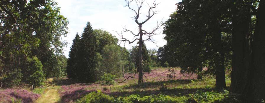 Lüneburger Heide Breeser Grund